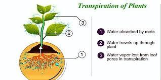 Transpiration by Plants